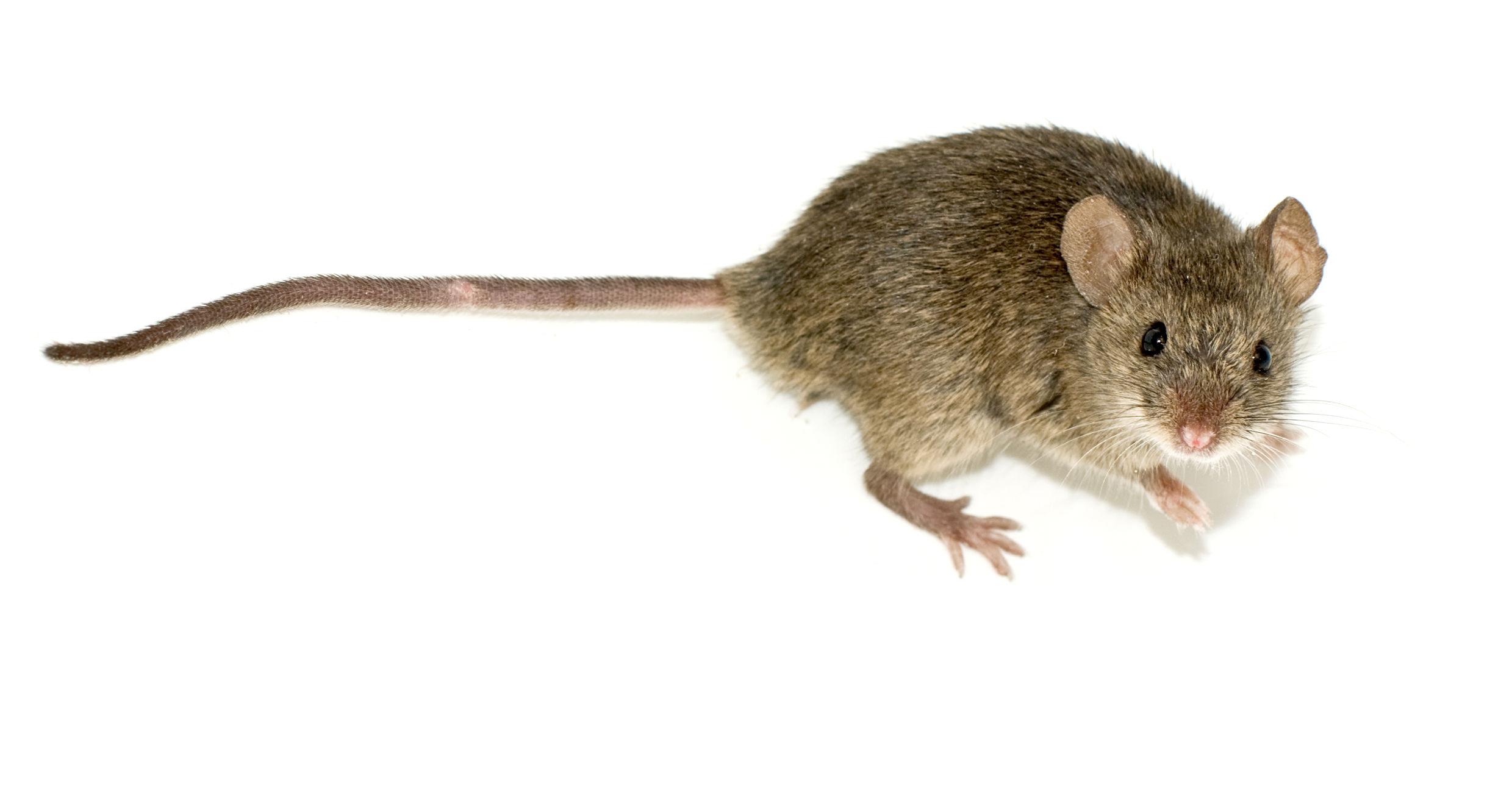 Fumigadora Costa Rica: Control de plagas de insectos y roedores ...