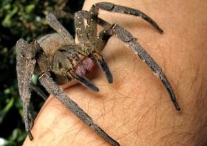 Fumigacion contra arañas
